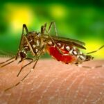 Mosquito-borne diseases has threaten World